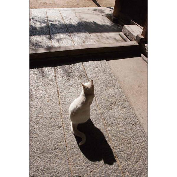 画像16: 今年も始めます!特製カレンダーです! ~猫カレンダー特集~