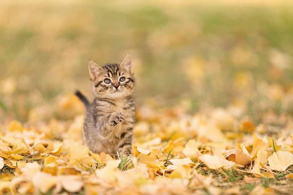 画像39: 今年も始めます!特製カレンダーです! ~猫カレンダー特集~