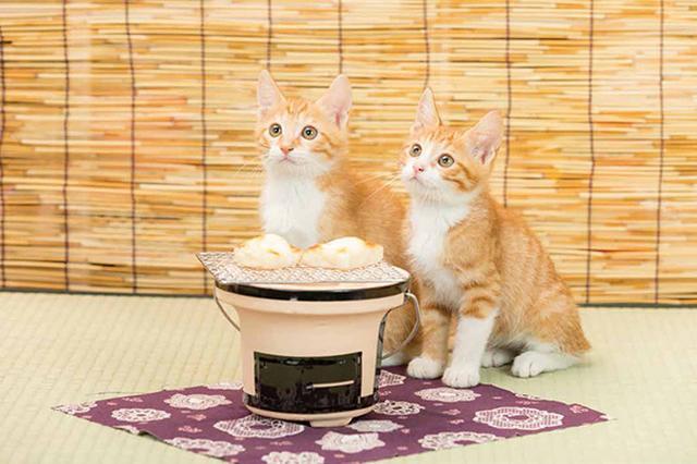 画像29: 今年も始めます!特製カレンダーです! ~猫カレンダー特集~