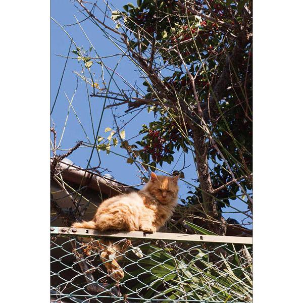 画像20: 今年も始めます!特製カレンダーです! ~猫カレンダー特集~