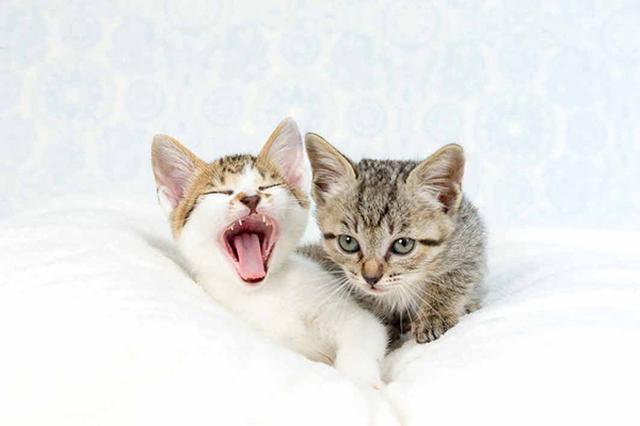画像33: 今年も始めます!特製カレンダーです! ~猫カレンダー特集~