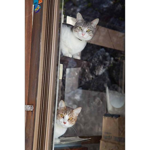 画像19: 今年も始めます!特製カレンダーです! ~猫カレンダー特集~