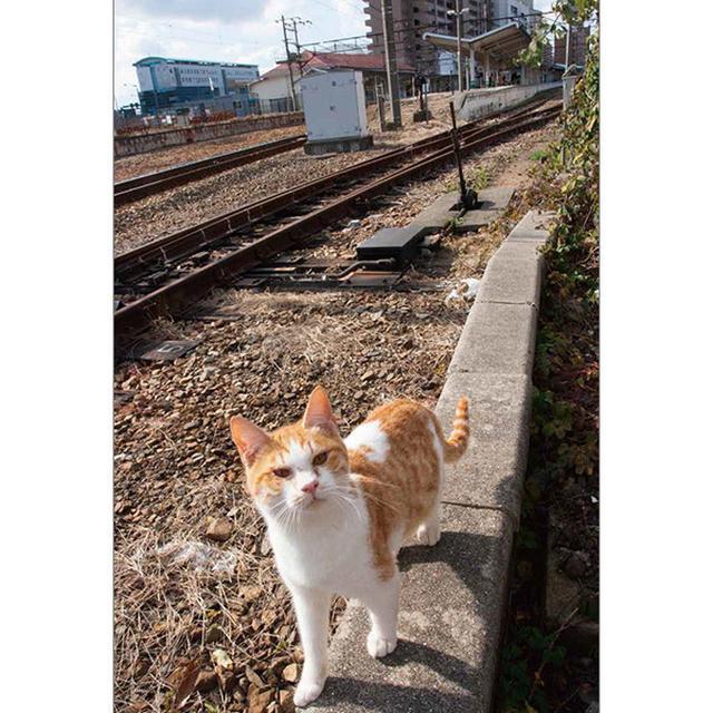 画像14: 今年も始めます!特製カレンダーです! ~猫カレンダー特集~