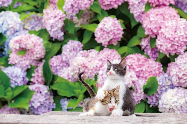 画像34: 今年も始めます!特製カレンダーです! ~猫カレンダー特集~