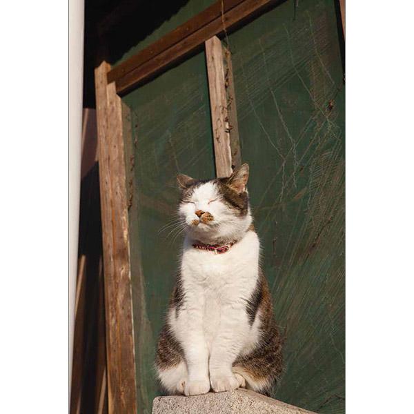 画像27: 今年も始めます!特製カレンダーです! ~猫カレンダー特集~