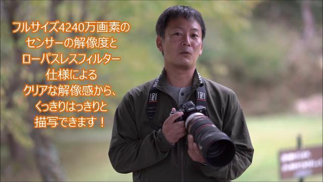 画像: 月刊カメラマン2018年11月号「ソニーα7R ⅢとG Masterレンズで野鳥を撮る! by 山田芳文」 youtu.be