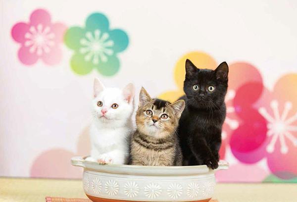 画像28: 今年も始めます!特製カレンダーです! ~猫カレンダー特集~