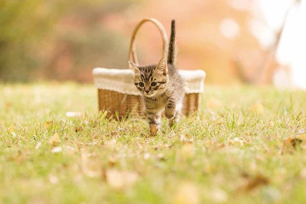 画像41: 今年も始めます!特製カレンダーです! ~猫カレンダー特集~