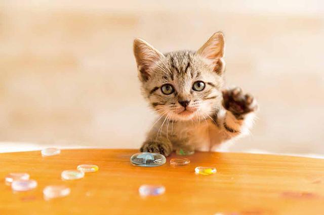 画像37: 今年も始めます!特製カレンダーです! ~猫カレンダー特集~