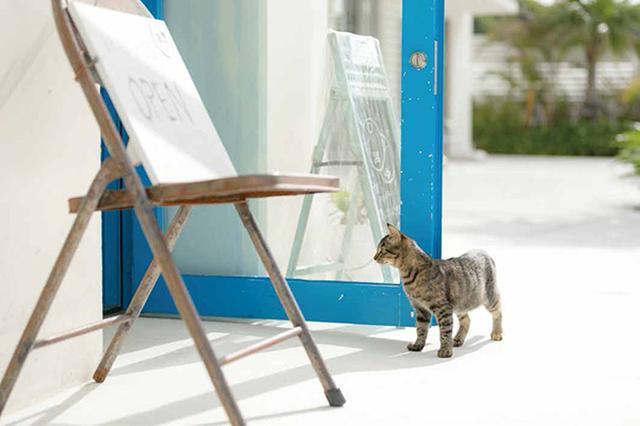 画像7: 今年も始めます!特製カレンダーです! ~猫カレンダー特集~