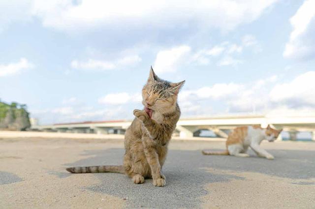 画像8: 今年も始めます!特製カレンダーです! ~猫カレンダー特集~