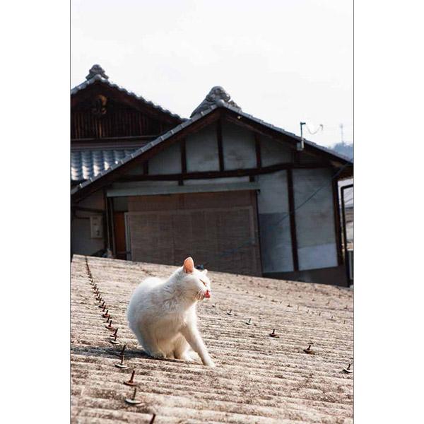 画像15: 今年も始めます!特製カレンダーです! ~猫カレンダー特集~