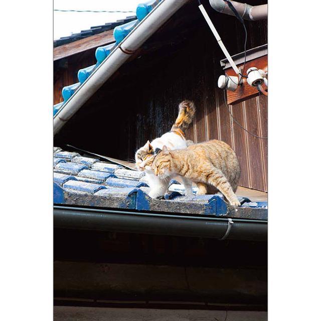 画像18: 今年も始めます!特製カレンダーです! ~猫カレンダー特集~