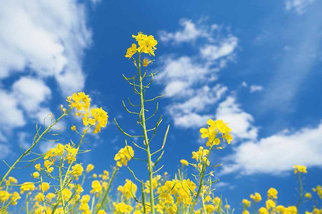 画像19: 素敵な「花」の写真がたくさんあります。 2019カレンダー ~「花」特集②~