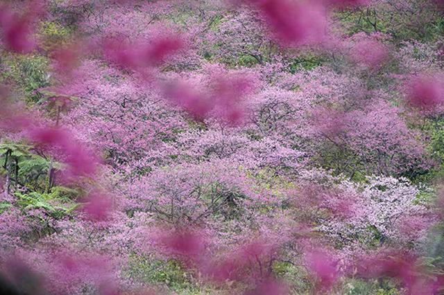 画像12: 素敵な「花」の写真がたくさんあります。 2019カレンダー ~「花」特集②~