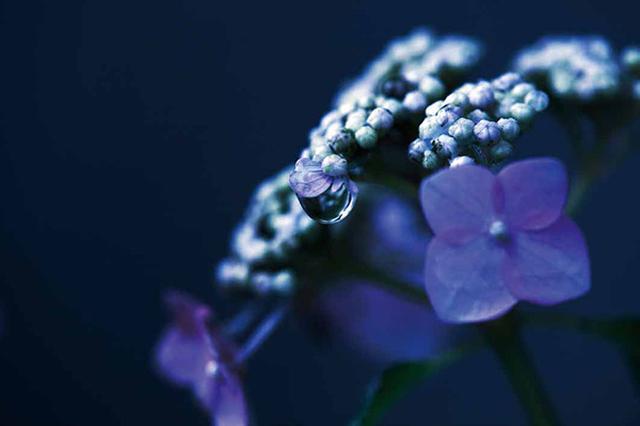 画像4: 素敵な「花」の写真がたくさんあります。 2019カレンダー ~「花」特集②~