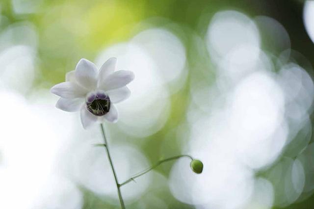 画像10: 素敵な「花」の写真がたくさんあります。 2019カレンダー ~「花」特集②~