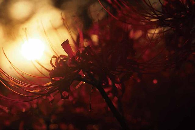 画像23: 素敵な「花」の写真がたくさんあります。 2019カレンダー ~「花」特集②~