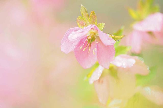 画像24: 素敵な「花」の写真がたくさんあります。 2019カレンダー ~「花」特集②~