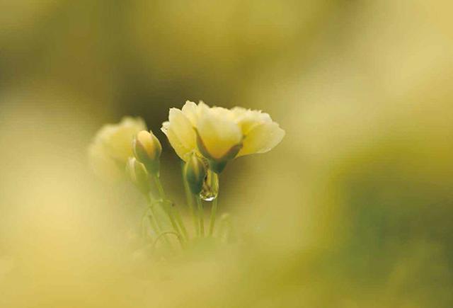 画像1: 素敵な「花」の写真がたくさんあります。 2019カレンダー ~「花」特集②~