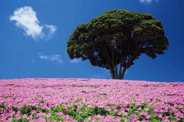 画像22: 素敵な「花」の写真がたくさんあります。 2019カレンダー ~「花」特集②~