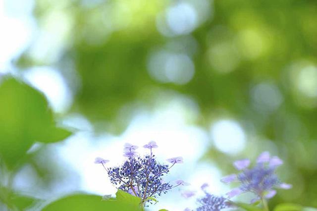 画像9: 素敵な「花」の写真がたくさんあります。 2019カレンダー ~「花」特集②~