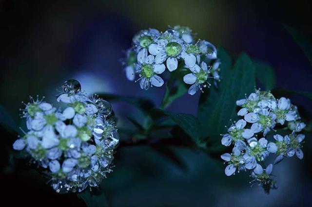画像3: 素敵な「花」の写真がたくさんあります。 2019カレンダー ~「花」特集②~