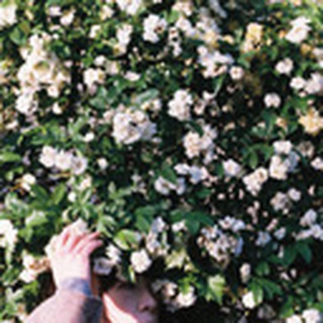 画像: tokyomariegold.tumblr.com