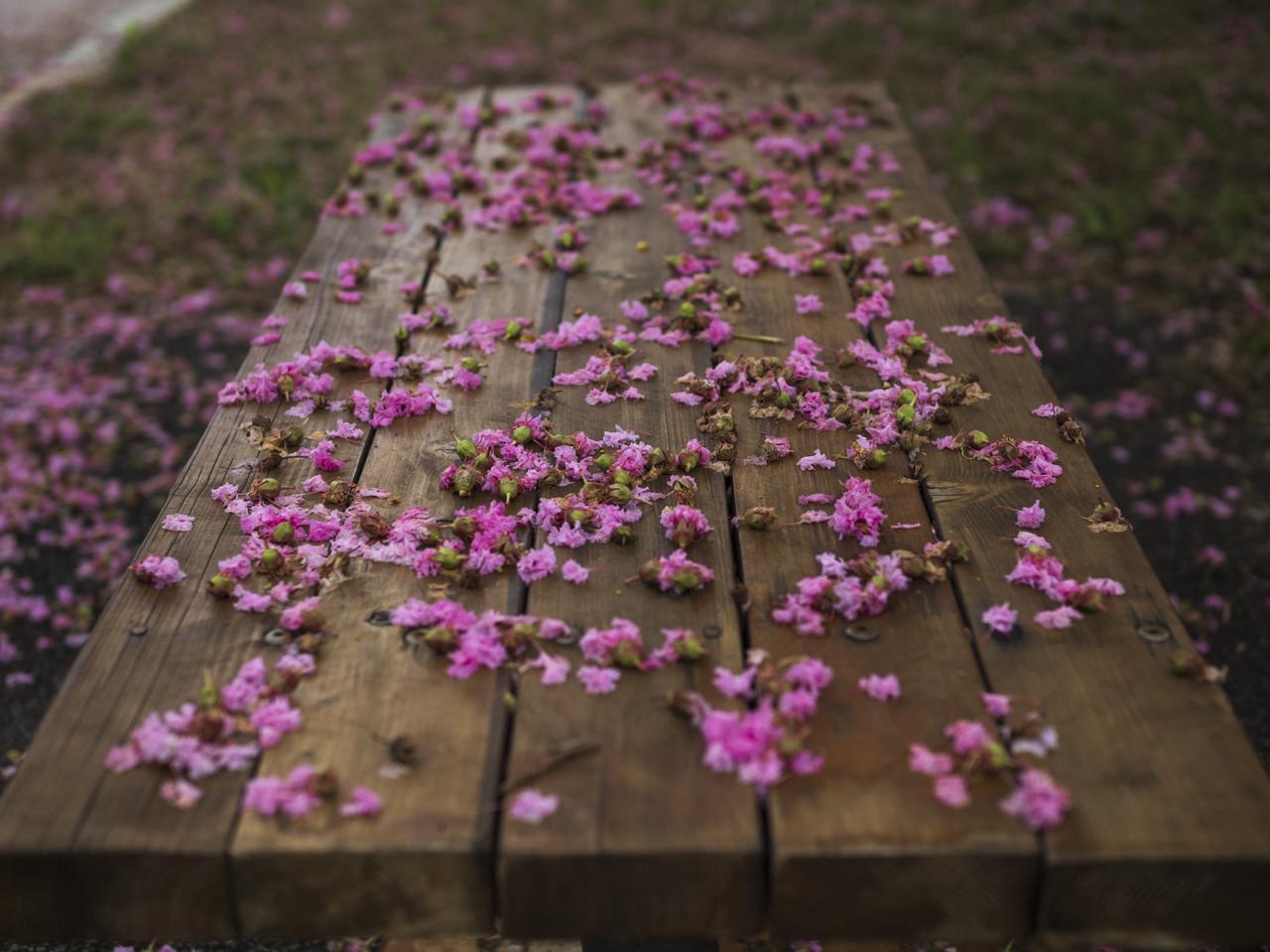 画像: 善本喜一郎 写真展 JINDAIJI Part 2  The Four Seasons「身近な絶景」が新宿オリンパスギャラリーで開催中!