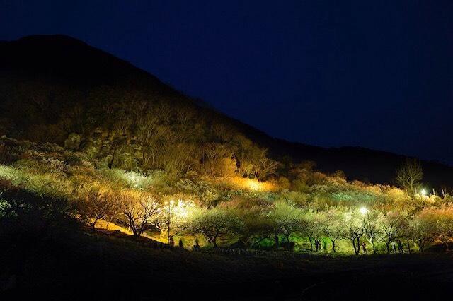 画像: 湯河原梅林ライトアップ