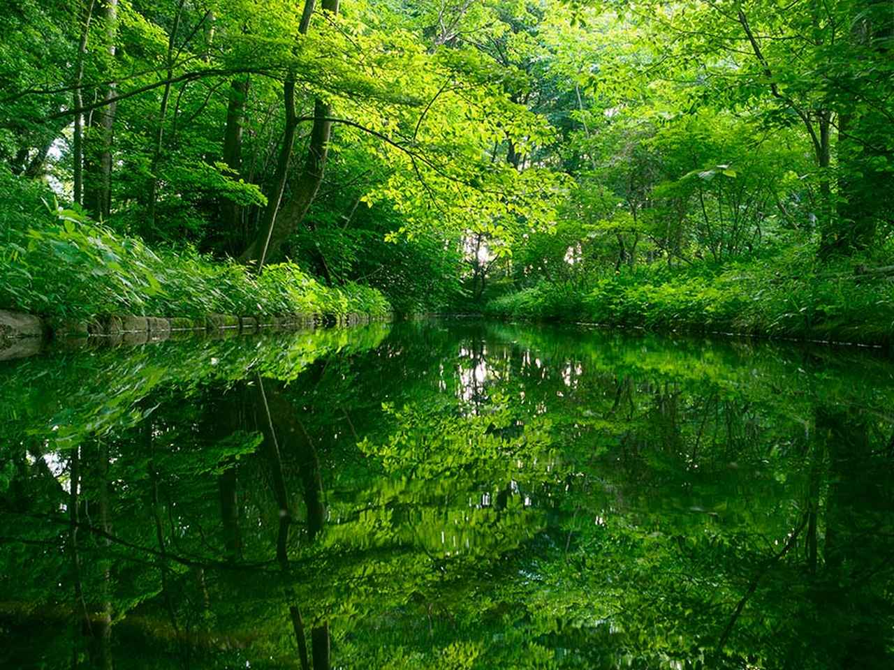 画像: 「JINDAIJI Part 2」−The Four Seasons「身近な絶景」−より