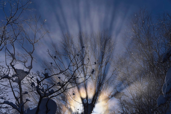 画像: ▲マイナス20℃の凍てついた大気の中、太陽が木越しに朝霧を照らし強烈な光芒を立ち上げた。αだからこそ撮る前に露出も光芒も確認できるから写せたといえる ■ソニーα7R Ⅲ FE 70-200mmF2.8 GM OSS 絞りF16 1/1250秒   マイナス1.3露出補正   WB:曇り   ISO400  RAW クリエイティブスタイル:風景 PLフィルター使用 三脚使用 上富良野町(1月)