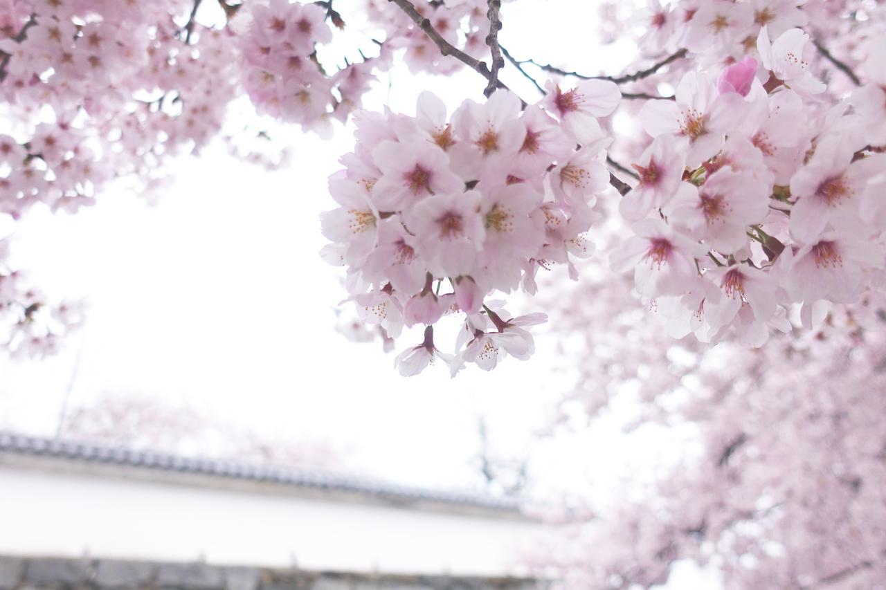 画像: オススメ撮影スポットその1〜福岡城の石垣