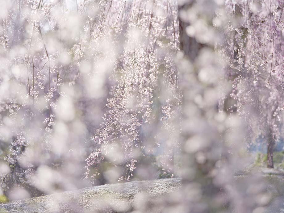 画像: 【オリンパスギャラリー東京】3月8日~3月13日 福田健太郎 写真展 オリンパスギャラリー東京 写真展一覧 ショールーム・ギャラリー&サービスステーション オリンパス