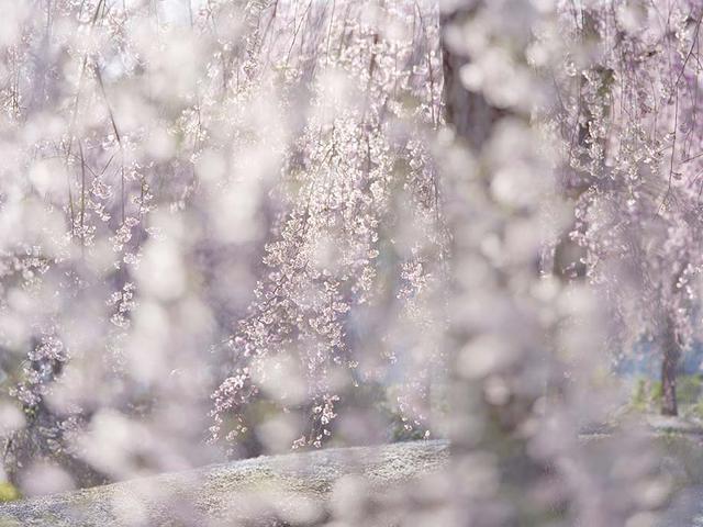 画像: 【オリンパスギャラリー東京】3月8日~3月13日 福田健太郎 写真展|オリンパスギャラリー東京 写真展一覧|ショールーム・ギャラリー&サービスステーション|オリンパス