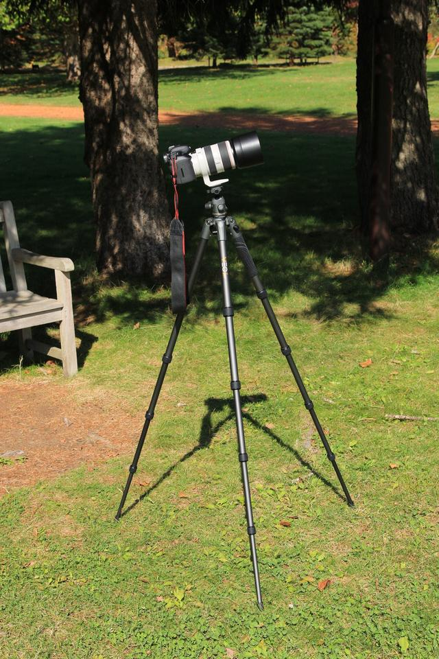 画像: EOS 7D Mark ⅡとEF70-300mm F4-5.6L IS USMの組み合わせでも問題ありませんでした。