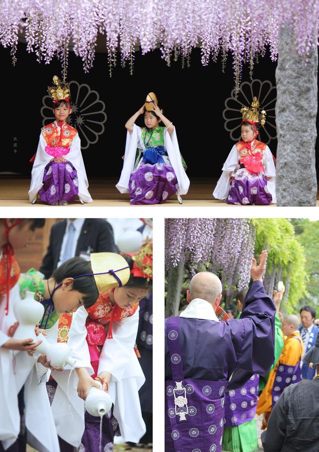 画像1: 武蔵寺では毎年4月29日に藤供養祭が行われとると!