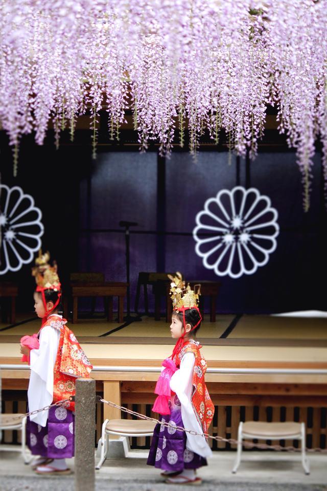 画像2: 武蔵寺では毎年4月29日に藤供養祭が行われとると!