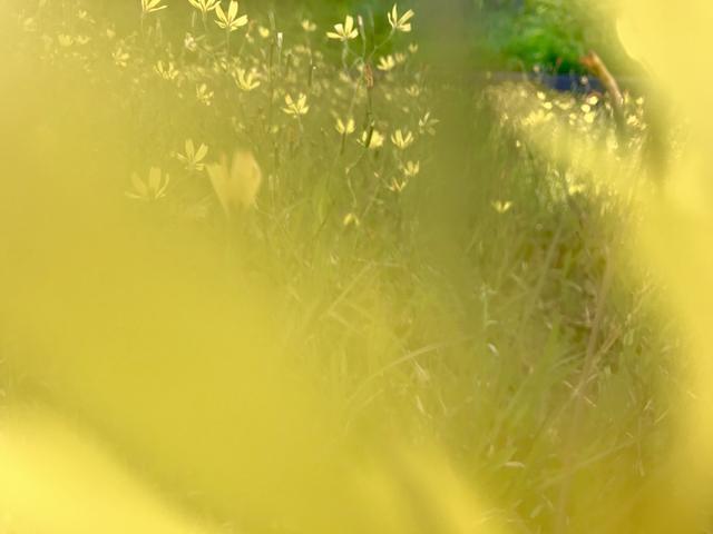 画像2: 鴻臚館跡地は福岡城址内に位置しとうと