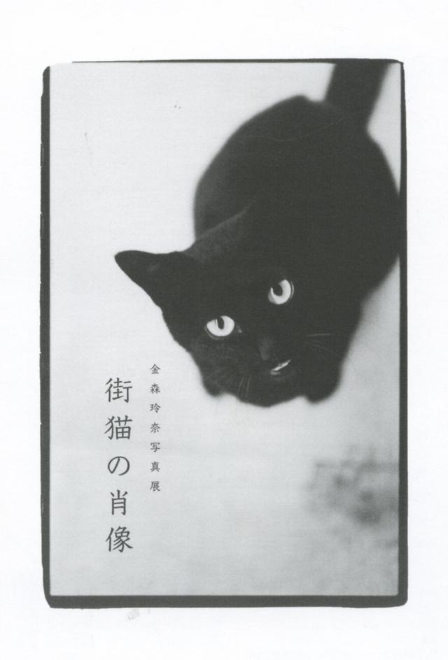 画像2: 金森玲奈 写真展「街猫の肖像」 ●開催中~2019年5月16日(木)●ギャラリー・アートグラフ