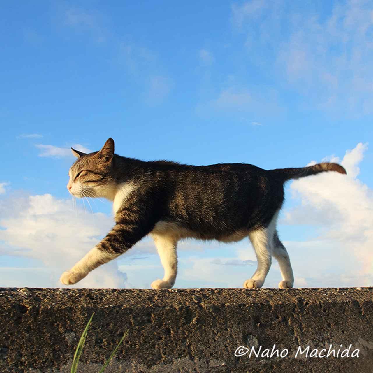 画像: NAHO
