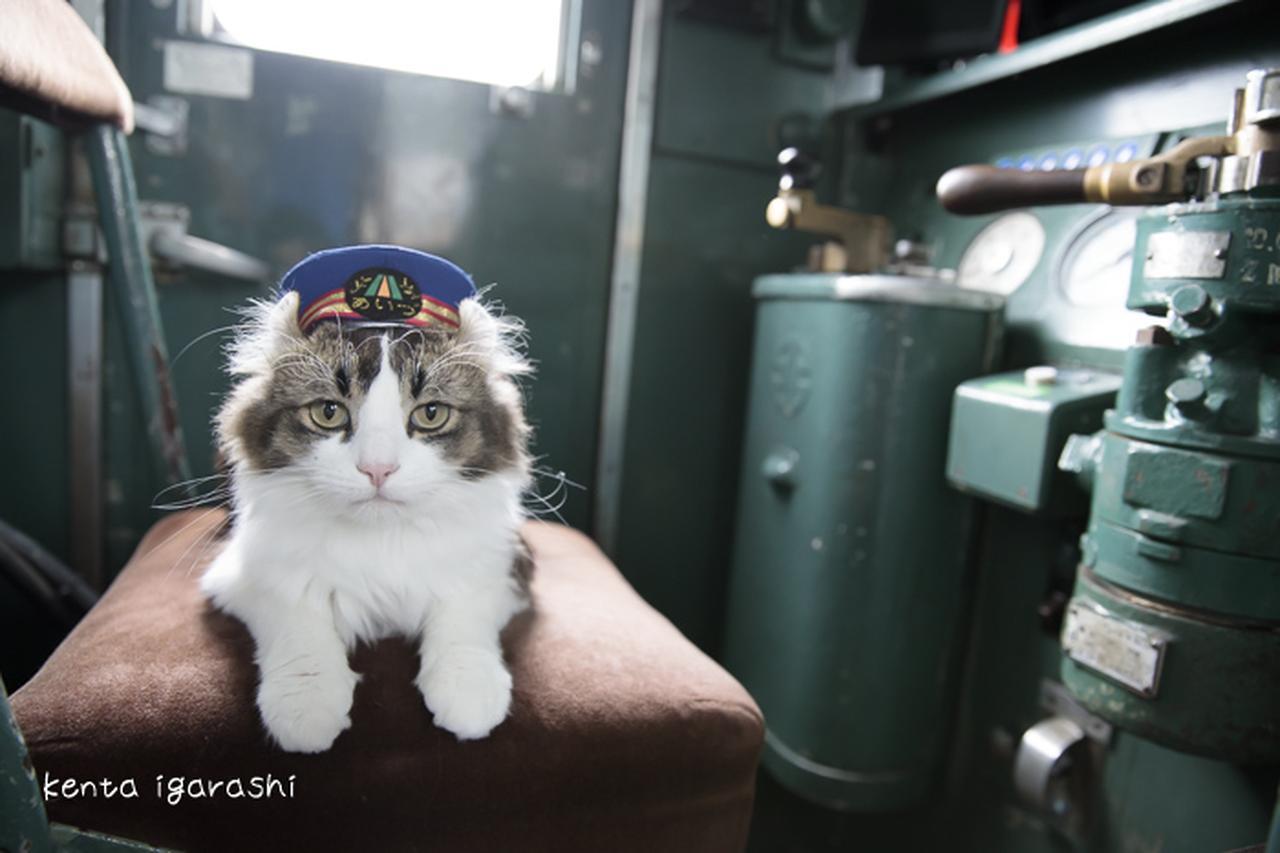 画像: 猫の合同写真展「ねこ専」2019渋谷 | 五十嵐健太 飛び猫