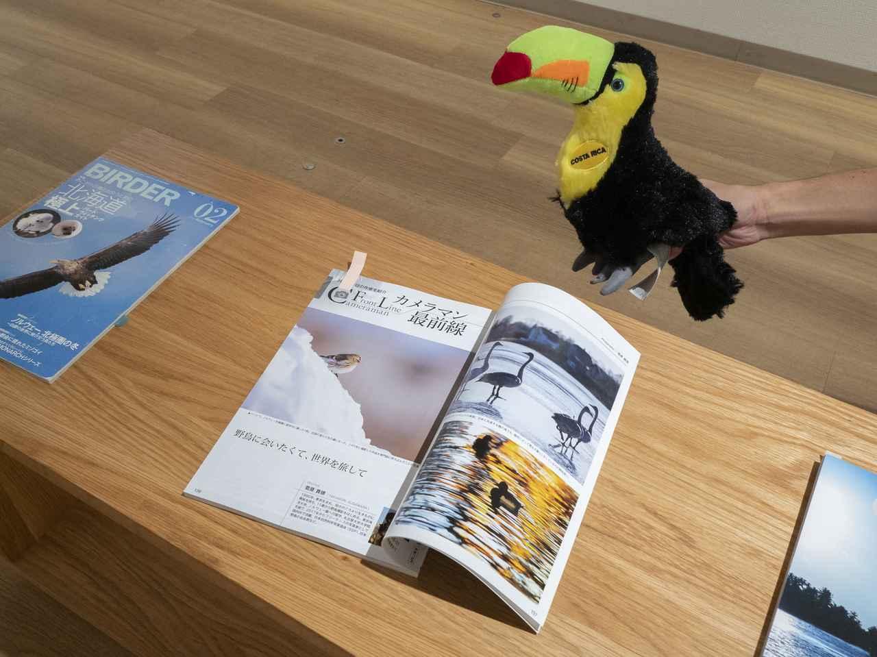 画像: 菅原さんは2019年1月号のカメラマン最前線に登場いただいてます。サンショクキムネオオハシもくぎづけ!?