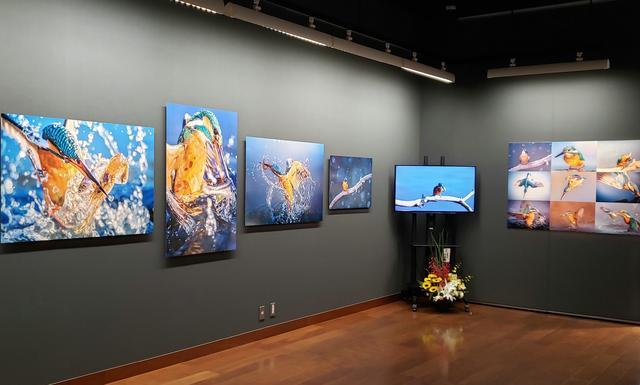 画像: 展覧会場風景。会場では、写真作品と共に、映像作品としても翡翠の姿も見ることができます。