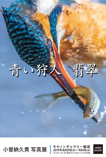 画像: キヤノン:キヤノンギャラリー|小曽納 久男 写真展:青い狩人 翡翠