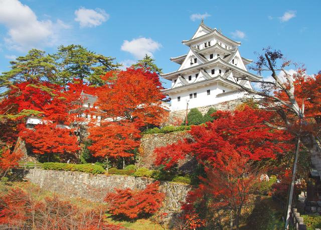 画像: 日本一美しいと言われる白亜の山城を取り囲む紅葉