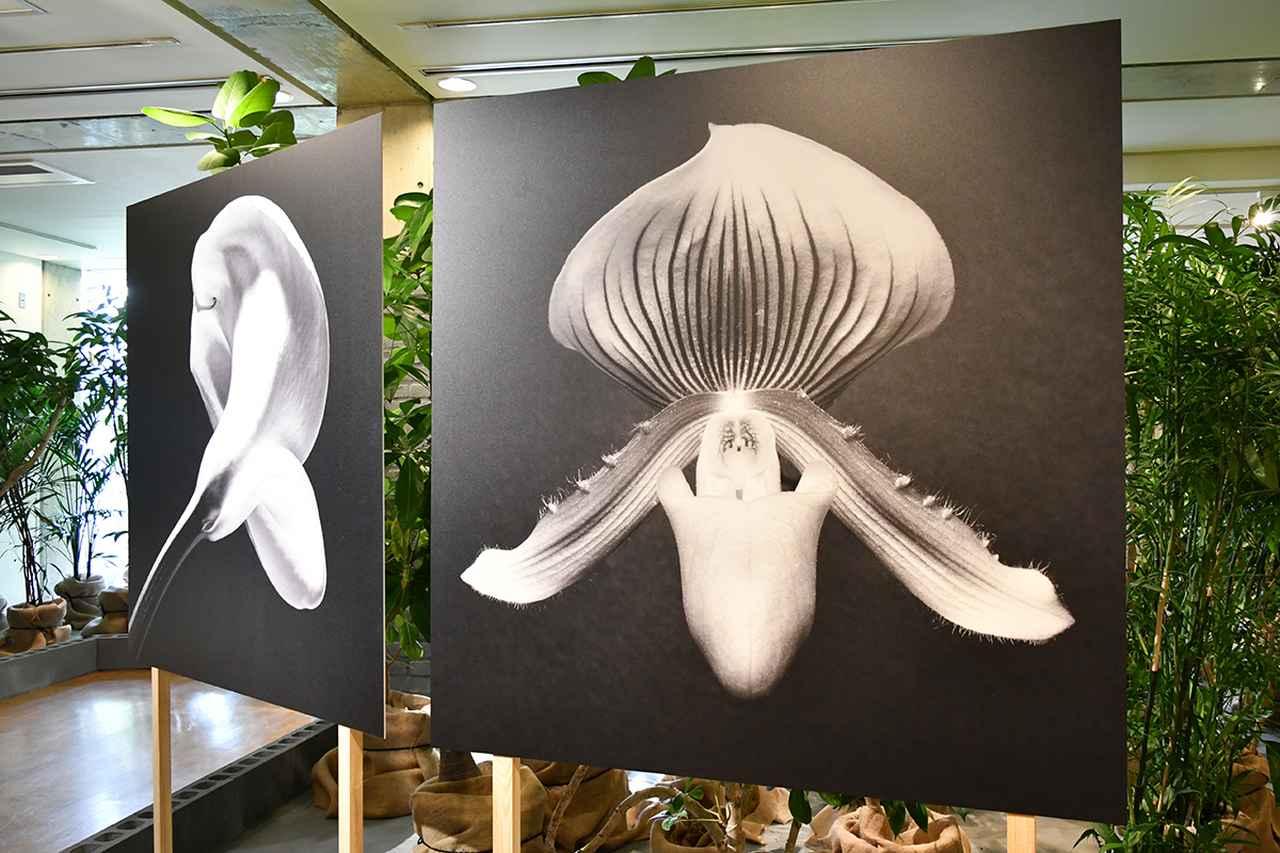 画像: 「ロバート・メイプルソープ」の作品。屋内で植物とともに展示されている。