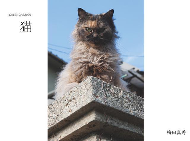 画像: カメラマン 2020カレンダーシリーズ 08 梅田真秀 「猫」-モーターマガジン Web Shop