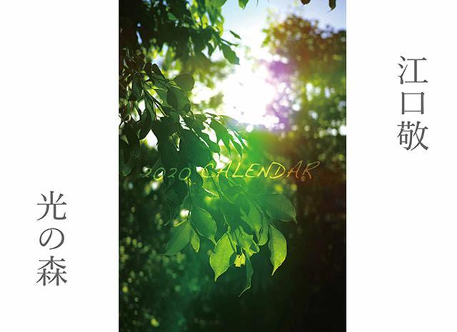 画像: カメラマン 2020カレンダーシリーズ 09 江口敬 「光の森」-モーターマガジン Web Shop
