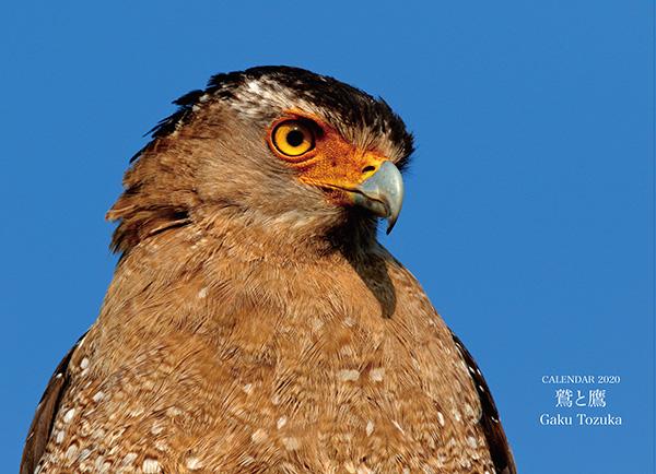 画像: カメラマン 2020カレンダーシリーズ 21 Gaku Tozuka 「鷲と鷹」-モーターマガジン Web Shop